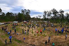Sixth Annual Community Tree Planting- thumbnail